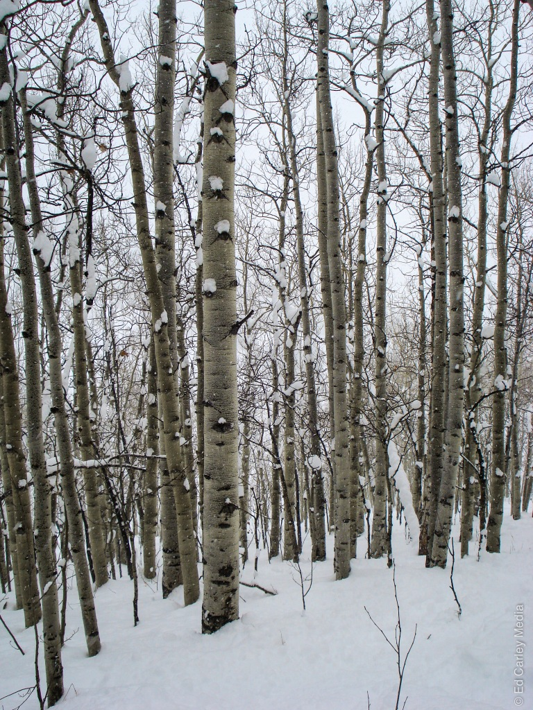 Painter Boy trees