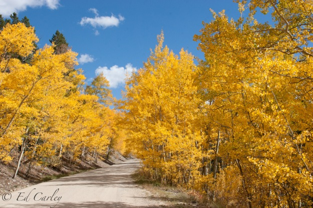 Breckenridge Co fall color. Aspen fall color.